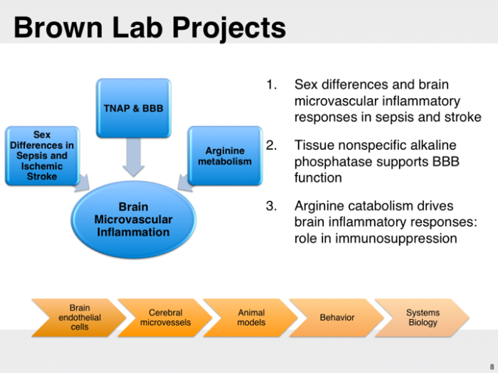 Brown Lab Projects Slide